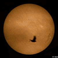 Bird transiting the Sun